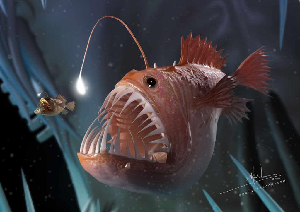 Aubrey peyton 39 s ocean zones thinglink for What do angler fish eat